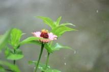 hujan10