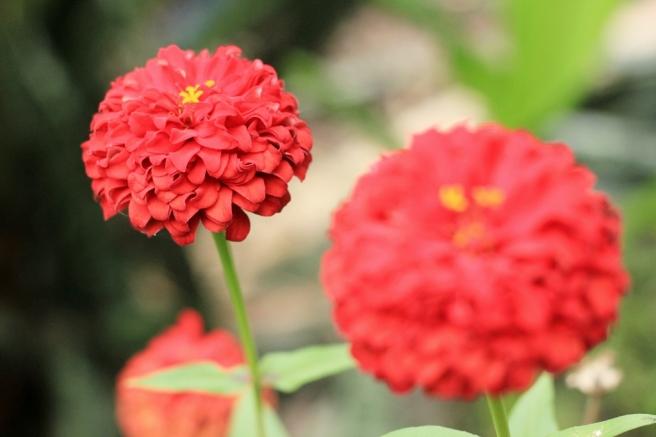bunga kertas02